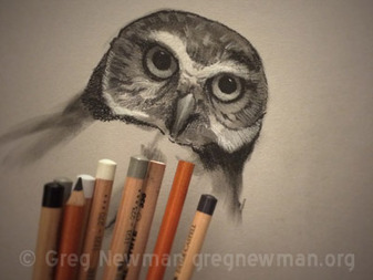 Owl Pastel Study
